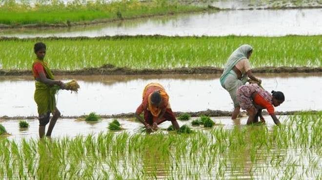 The Federal, English news website, farmers, Karnataka, rainfall deficit