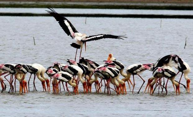 Pulicat Lake Adani port Chennai - The Federal
