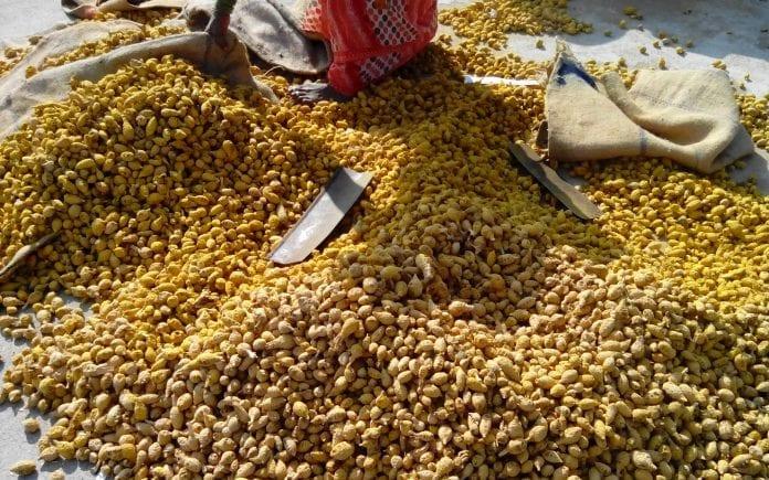 Turmeric, curcumin, red jowar, Dharmapuri Aravind, Kavitha