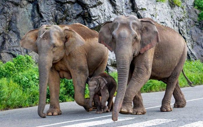 Elephant, elephant deaths, Nandankanan zoo, herpes virus