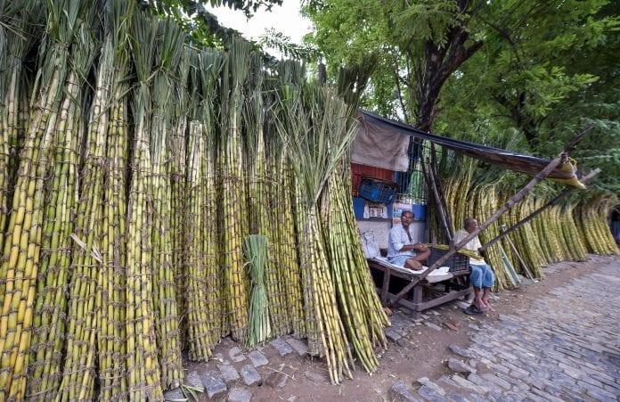 Sugarcane market