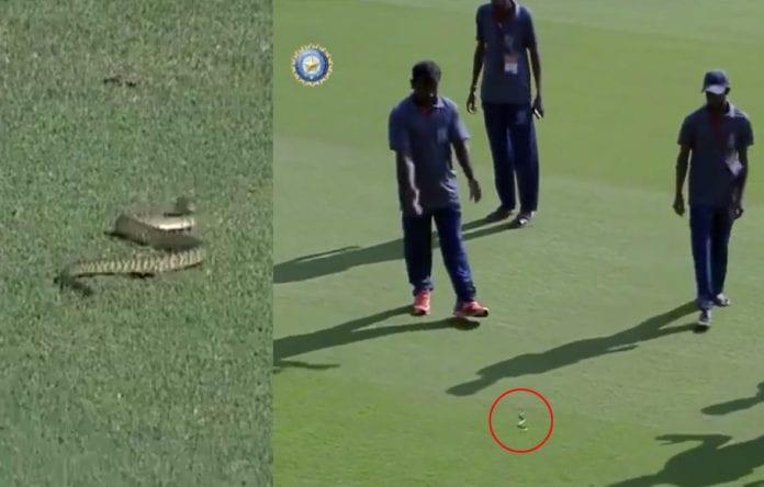 Snake invasion, Vidarbha, Andhra Pradesh, Ranji Trophy, Vijaywada cricket stadium