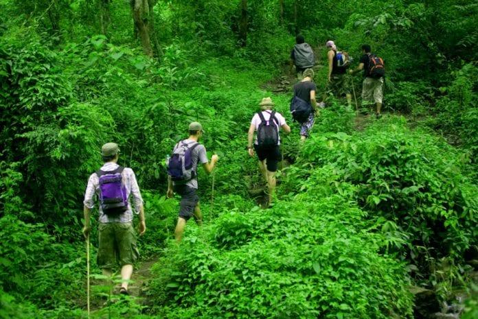 woman trekker, forest, trampled, elephant, death, Forest Department, Periyanaickenpalayam, Coimbatore