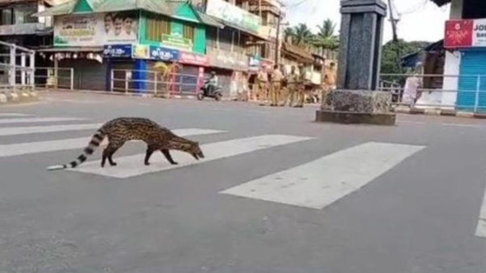 Civet Kozhikode animal city