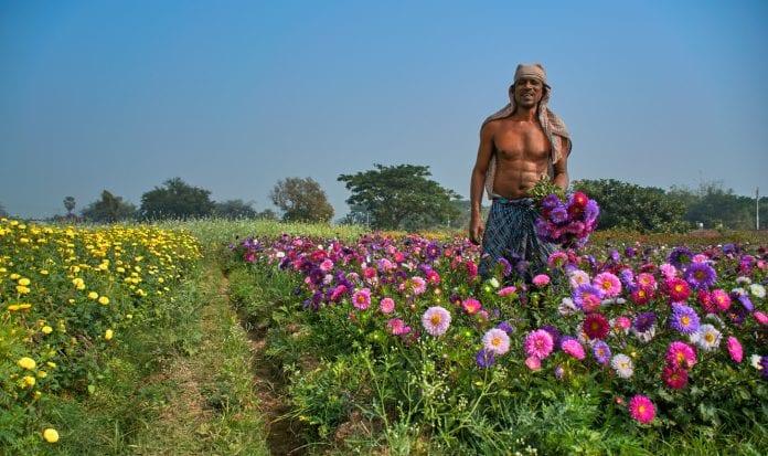 Bengal, rural industry, florists