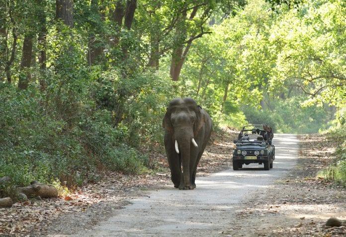 man-elephant conflict, Lockdown, Corbett National Park, elephants,