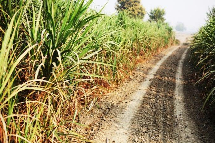 crop, Tamil Nadu, lockdown,