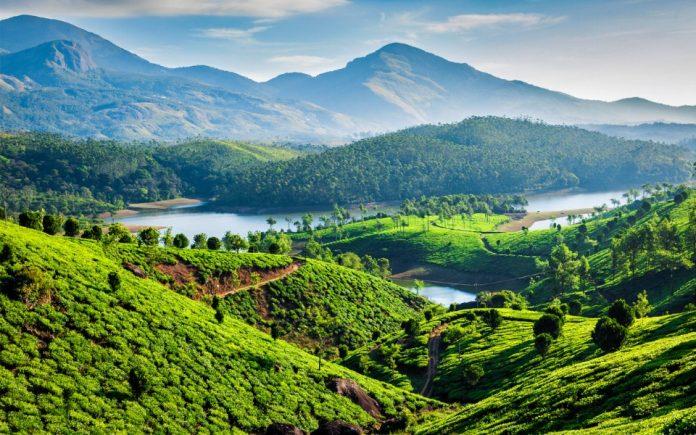 COVID-19, coronavirus, Lockdown, tea, farmers, tea cultivation, flowers