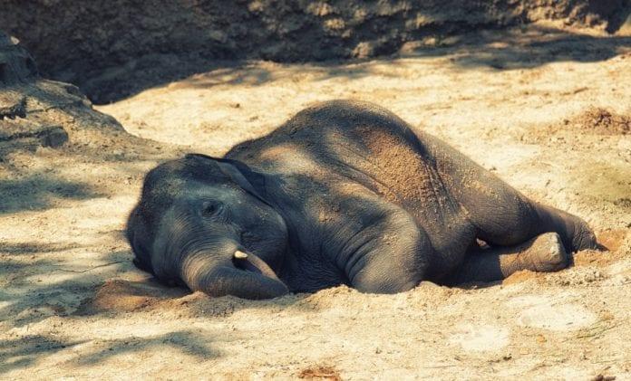 elephants, Cauvery wildlife sanctuary, man-animal conflict,