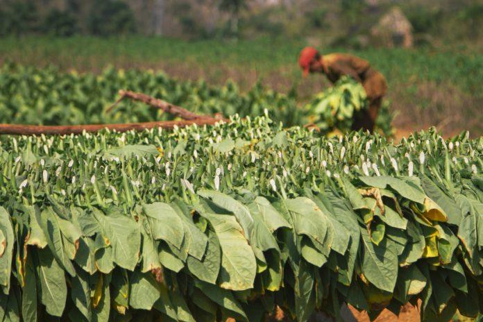 tobacco farmers, FAIFA, financial package, rescue package, Federation of All India Farmer Associations, coronavirus, COVID-19, Lockdown