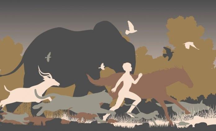 city life, biodiversity, nature, Celebrating biodiversity, dogs, human-animal conflict