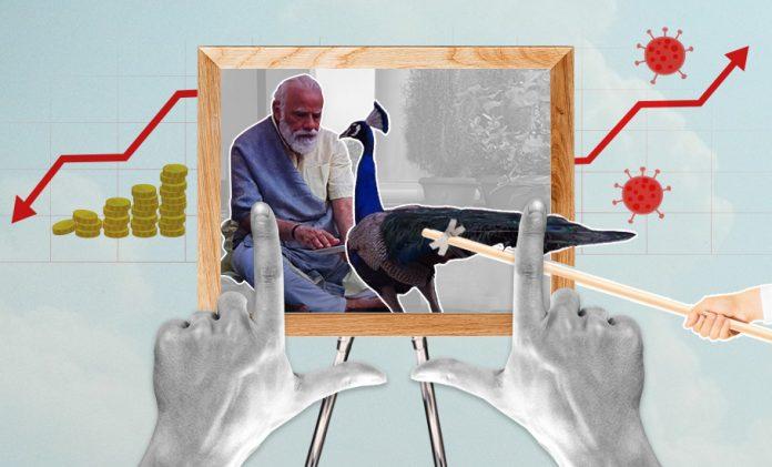 Modi Peacock pictures