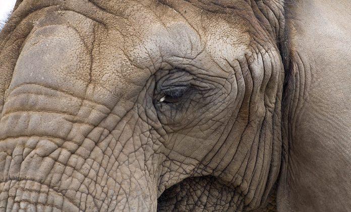 Elephant, deaths, Botswana, Coimbatore