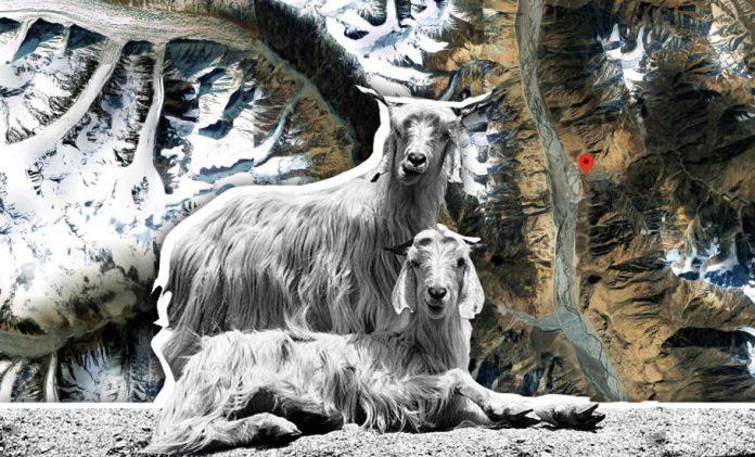 Ladakh winter