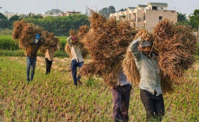 Paddy harvesting