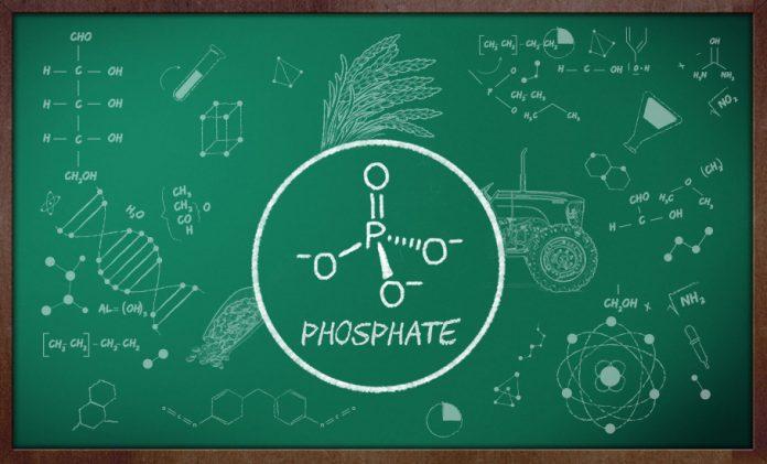 Phosphate fertiliser, fungus,