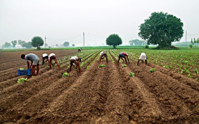 Union Budget, farming, The Federal, English news website